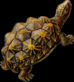 prehistoric drawing turtle