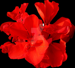 Red Flower PNG - Exclusive by Thy-Darkest-Hour on DeviantArt