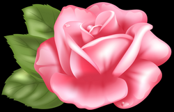 Pink Rose Transparent PNG Clip Art Image | Gallery Yopriceville ...