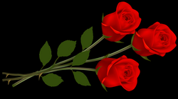 Large Red Roses PNG Clipart | Gallery Yopriceville - High-Quality ...
