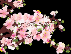Sakura Flower PNG HD Transparent Sakura Flower HD.PNG Images. | PlusPNG