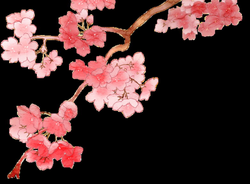 Cherry Blossom PNG 2 by dothenyancat on DeviantArt