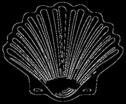 Sea Shell Silhouette at GetDrawings.com | Free for personal use Sea ...