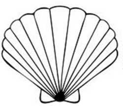 seashell clipart simple