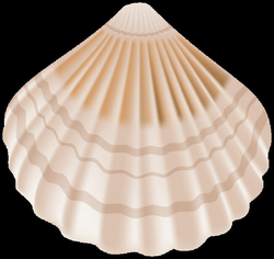 seashell clipart transparent background