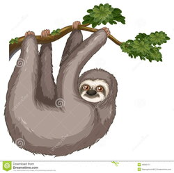 sloth clipart hanging