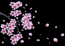 Spring Branch with Tree Flowers PNG Clipart | Gallery Yopriceville ...