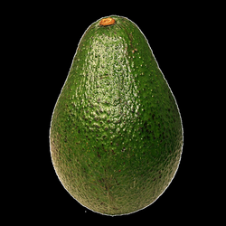 Avocado transparent PNG - StickPNG