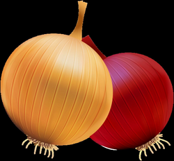 Onion and Red Onion PNG Clipart | FRUIT AND VEGETABLES CLIP ART ...