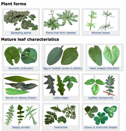 weeds clipart weed plant