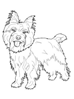 yorkie clipart cairn terrier