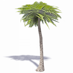 3d palm tree png, Picture #791940 3d palm tree png
