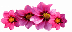 Types of Flowers - 170+ Flower Names + Pictures | FlowerGlossary.com