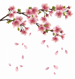 Beautiful Pink Spring Branch with Falling Petals PNG Clipart   print ...