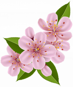 Spring Cherry Blossom Flowers PNG Clip Art Image   Gallery ...