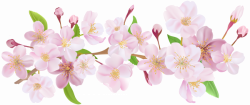 Cherry Blossom Spring Branch PNG Clip Art   pretty pictures i can ...