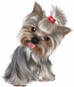 Terrier Drawing Yorkie Poo Picture 1207420 Doggy Drawing Yorkie