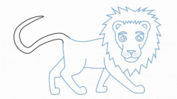 Drawing lions step by, Picture #1038224 drawing lions step by