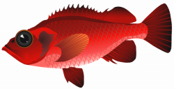 Red Fish PNG Clipart - Best WEB Clipart