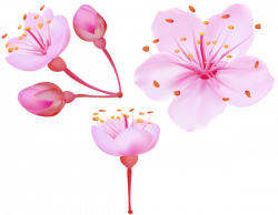 Spring Cherry Blossoms PNG Clip Art Image   Gallery Yopriceville ...