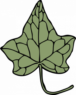 Ivy Drawing Leaf Vine Araliaceae free commercial clipart - Ivy ...