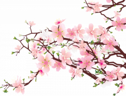 Japanese Cherry Blossom Clipart at GetDrawings.com   Free for ...