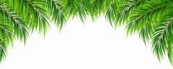 Palm Leaves Decor PNG Clip Art Image | Gallery Yopriceville - High ...