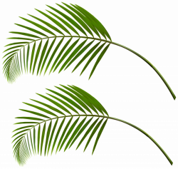 Palm Leaves PNG Clip Art   Gallery Yopriceville - High-Quality ...