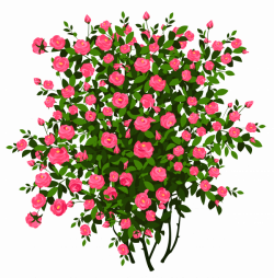 Pink Rose Bush PNG Clipart Picture | Gallery Yopriceville - High ...