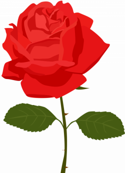 Transparent Red Rose PNG Picture | Gallery Yopriceville - High ...