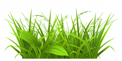 Free Weeds Cliparts, Download Free Clip Art, Free Clip Art on ...